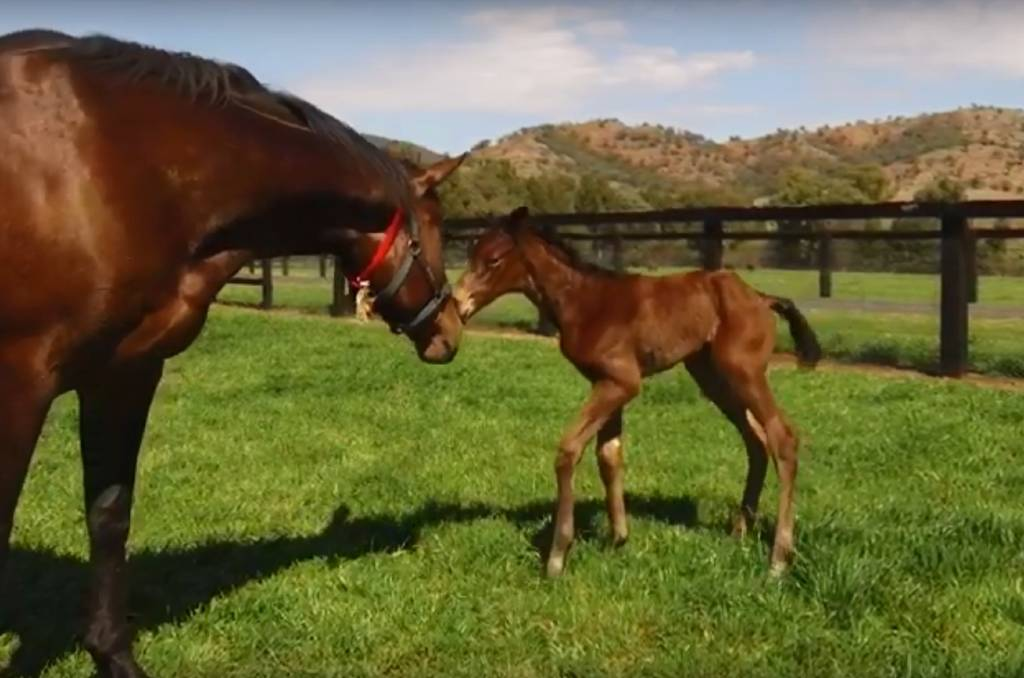 Winx Gets A Little Sister Newcastle Herald Newcastle Nsw