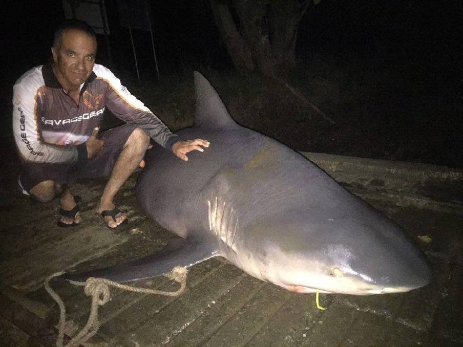 SPECIES IDENTIFIED: Fisheries officials say a bull shark, such as this three-metre specimen caught and released in the Hastings River, Port Macquarie, in 2016, by angler Anthony Micallef, pictured, and his son Chris. Picture: Port Macquarie News