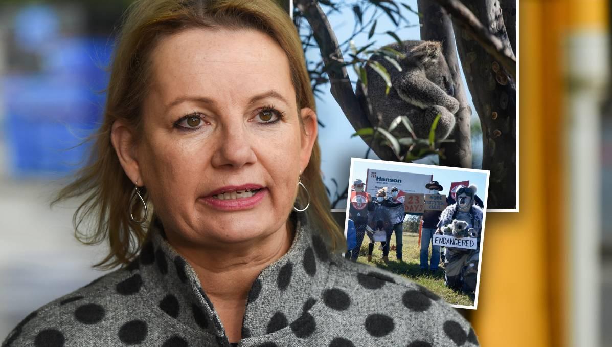 Rocks trump koalas as minister approves Brandy Hill quarry expansion