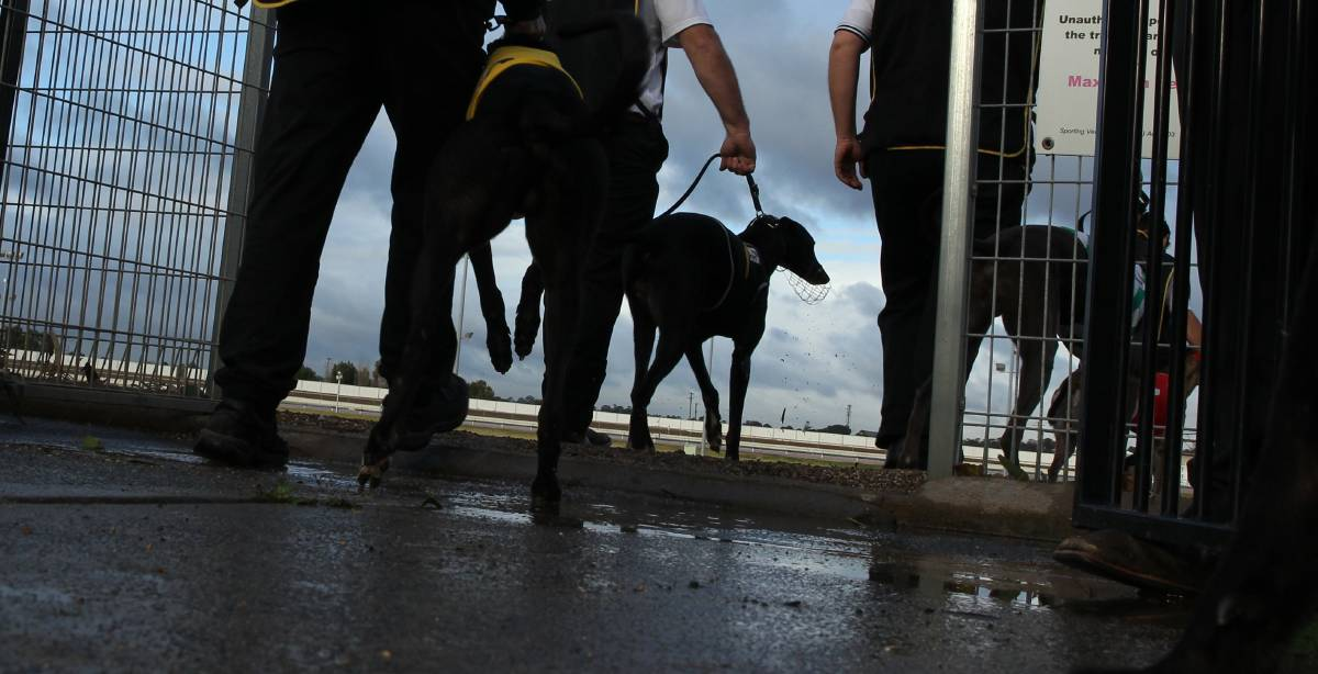 GREYHOUND RACING: A greyhound race at Maitland Showground in 2017. Picture: Max Mason-Hubers.