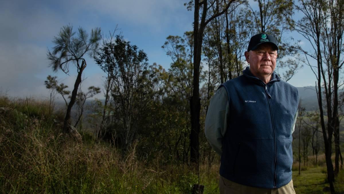 Without a breeding program, koala extinction will be 'sooner rather than later': Port Stephens Koalas