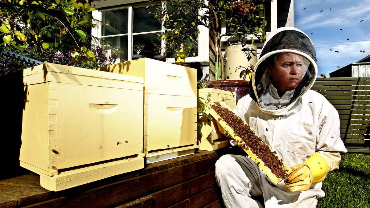 WELL SUITED: Urban beekeeper Kelly Lees started Urban Hum in October, putting hives in backyards around the city.  Pictures: Simone De Peak
