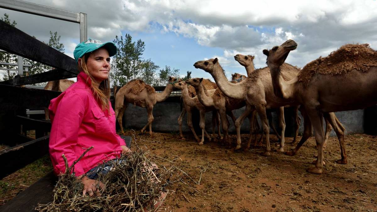 Michelle Phillips and the camels at her Denman property. Picture: Simone De Peak