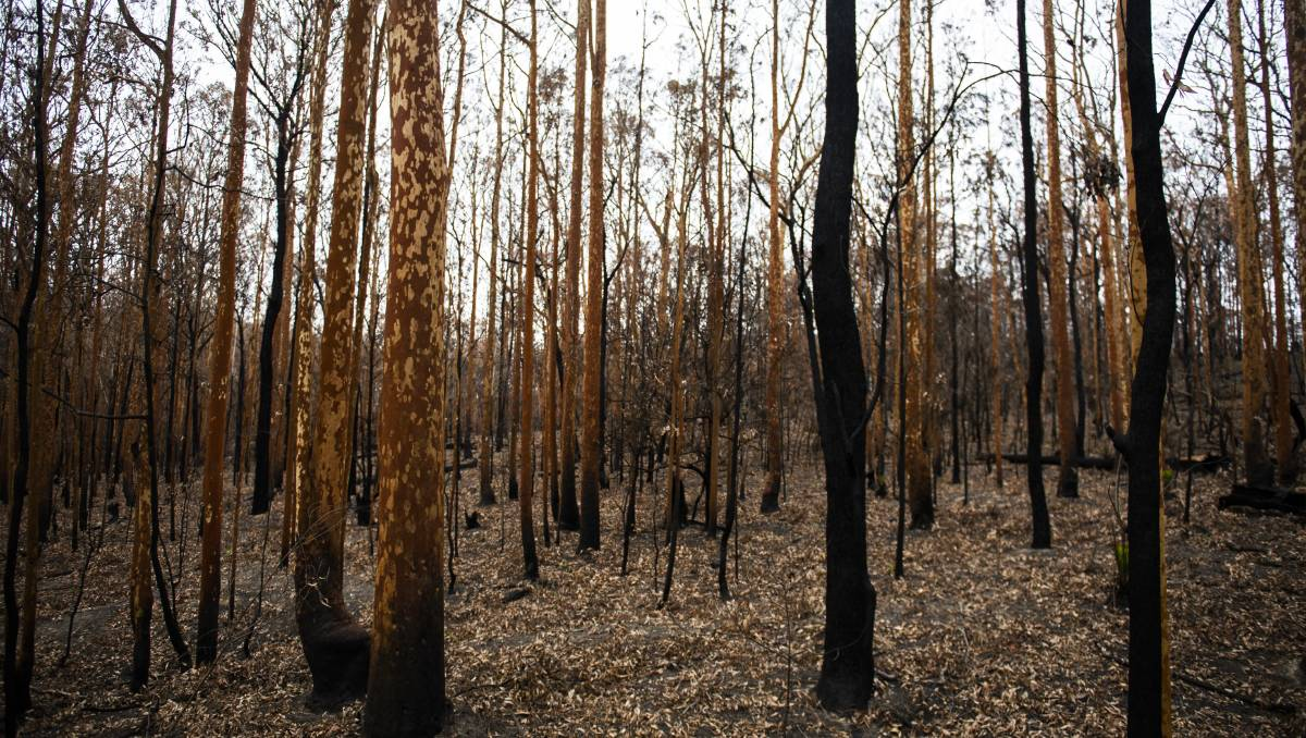 Why recommendations of bushfire royal commission can't be ignored